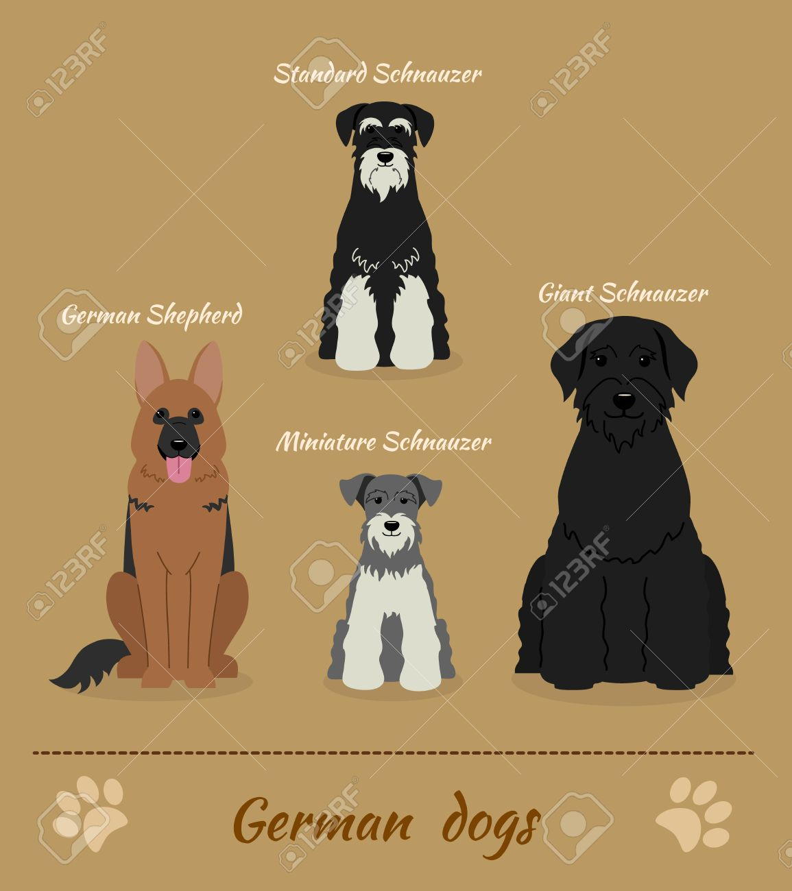 Set Of German Dogs Vector Illustration Of Four Different Breeds