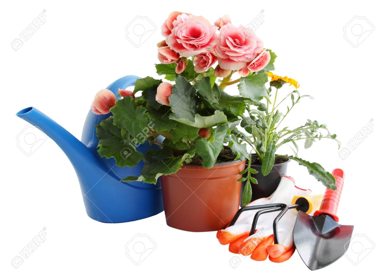 garden tools and flowers for planting in flower beds - 27415784