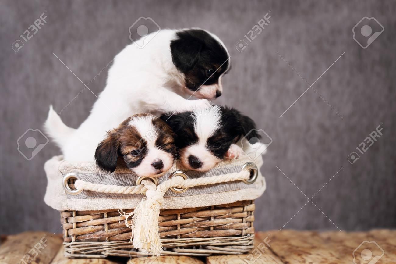 子犬 小型 犬