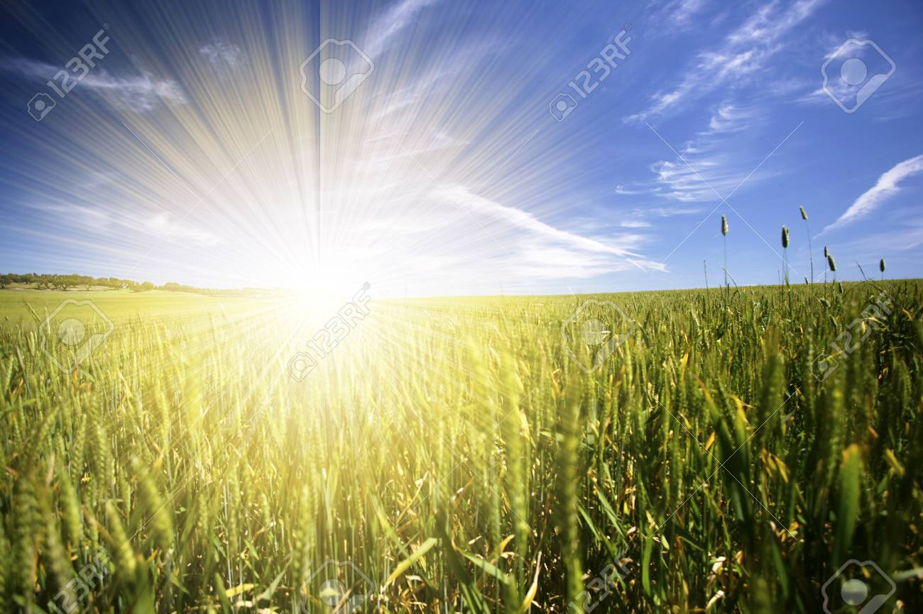beautiful spring landscape with blue sky and sunrays Stock Photo - 4601654
