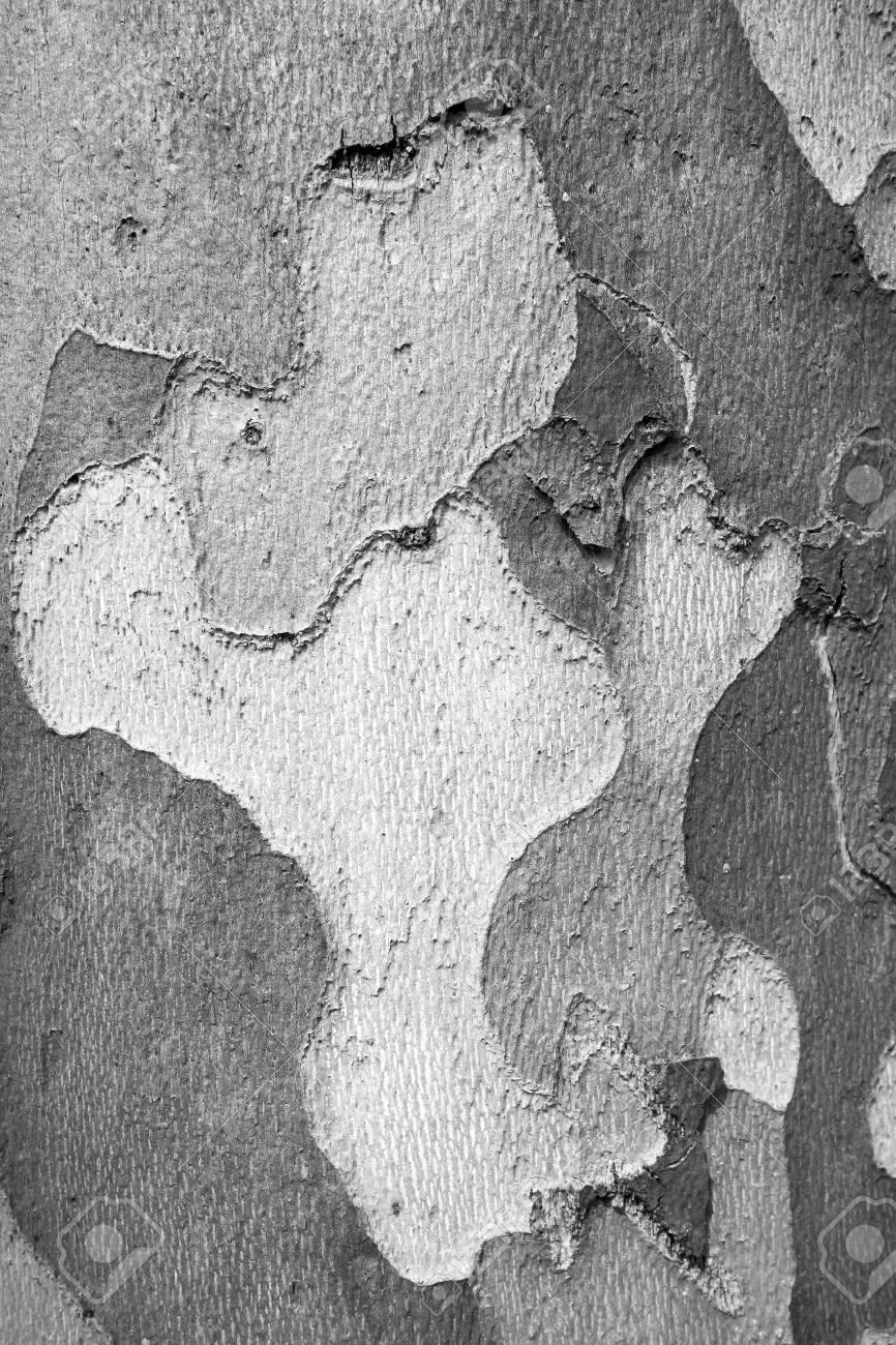 モノトーン壁紙 自然の背景の木の古い皮感の抽象的なむら の写真素材 画像素材 Image