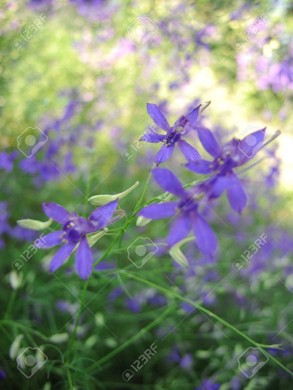 Beautiful Spring Floral Background With Small Purple Flowers Stock