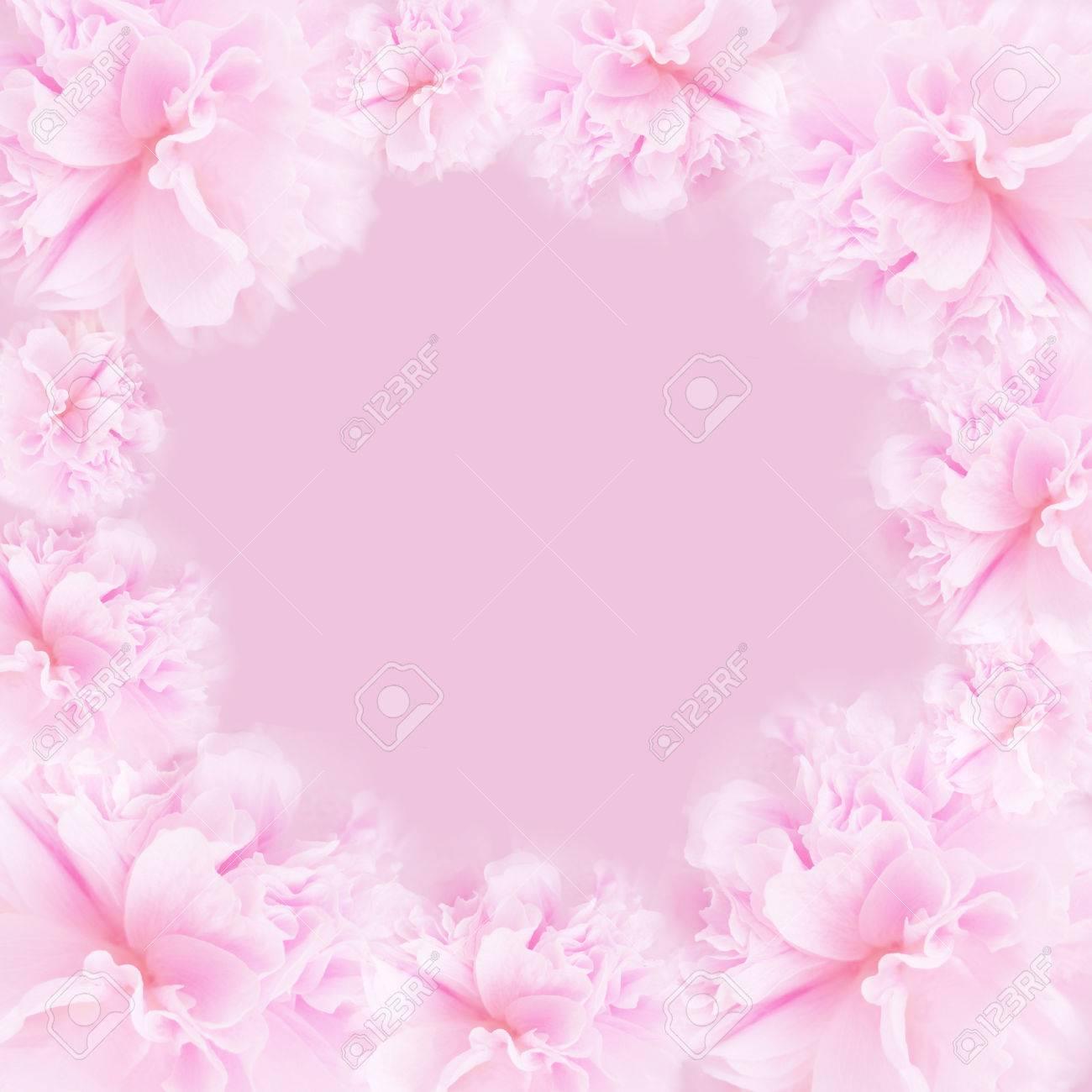 Pink flower on soft pastel color in blur style. Blossom - pink flower, floral background. Pink background. - 75527843