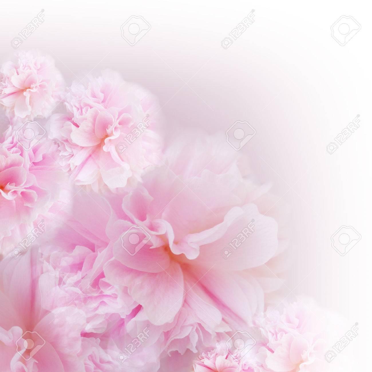 Pink flower on soft pastel color in blur style. Blossom - pink flower, floral background. Pink background. - 75527895