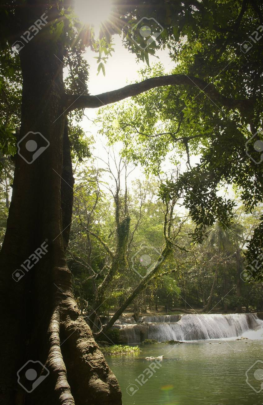 Silhouette Big Tree With Waterfall In Background Stock Photo Picture And Royalty Free Image Image 63119155