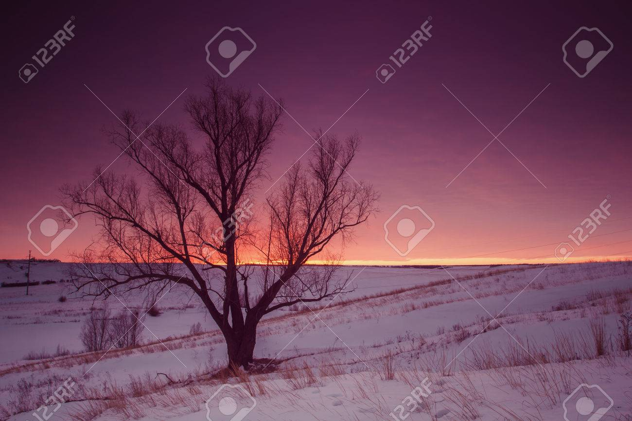 Winter nature landscape. Silhouette of tree at sunset - 51261677