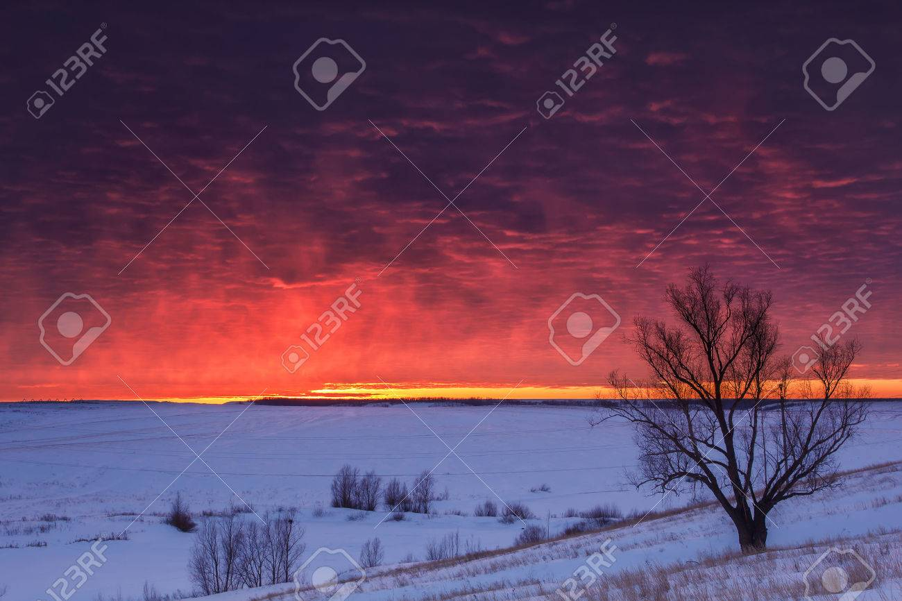 Winter nature landscape. Silhouette of tree at sunset - 51261763