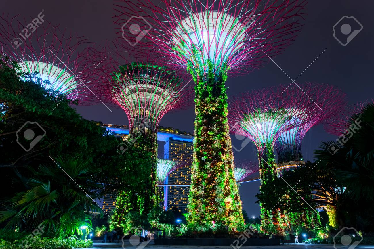 Supertree Grove Forest Illuminated At Night Gardens By The Bay