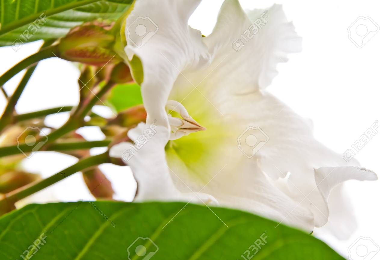 Fantastic white flower shop contemporary wedding and flowers white flower in flower shop stock photo picture and royalty free mightylinksfo Image collections