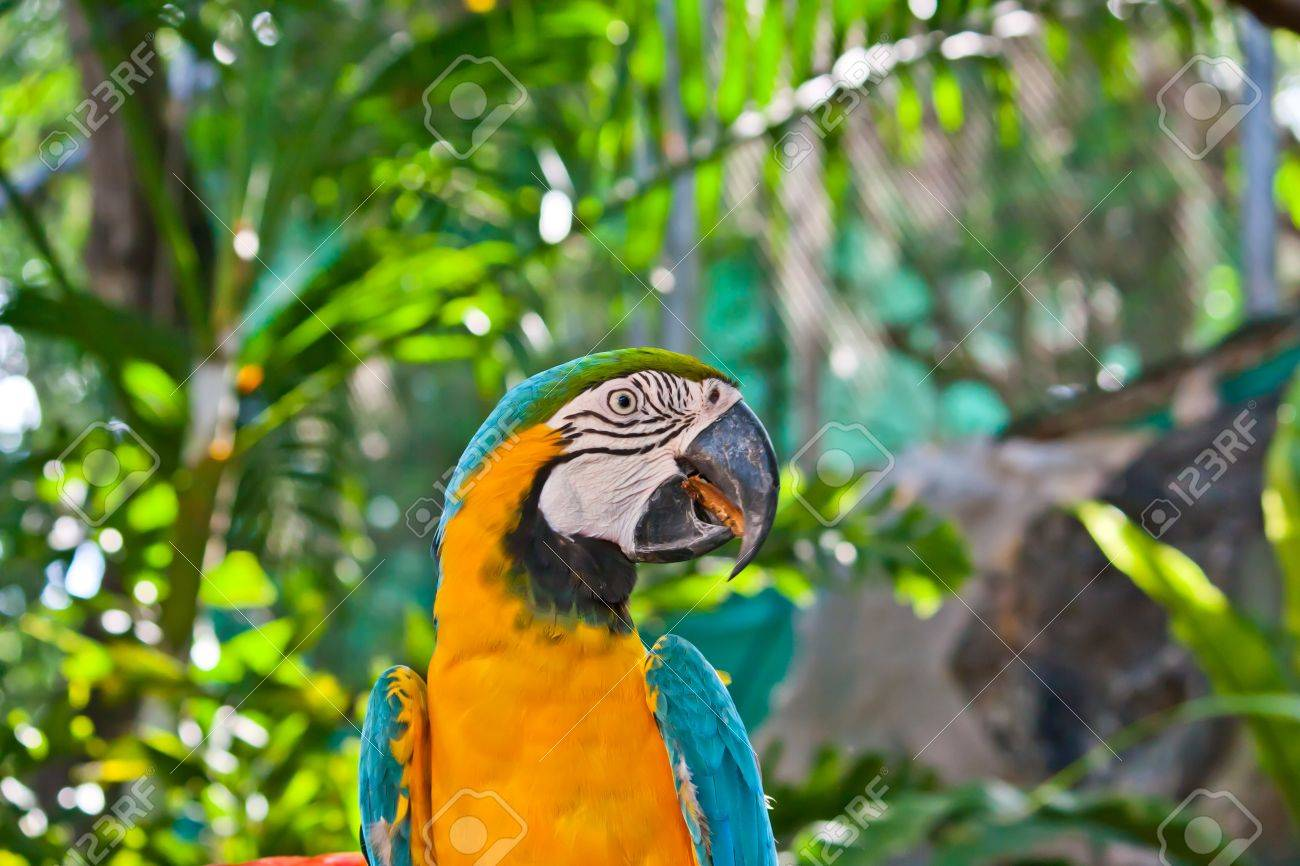 Colorful macaw parrot Stock Photo - 13592296