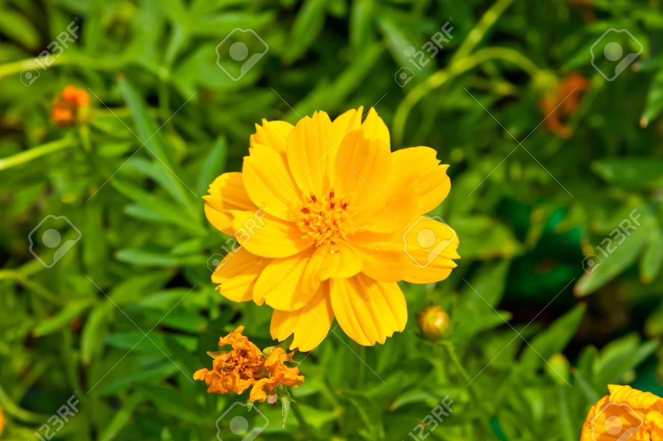 Belle Fleur Jaune Closeup Petales