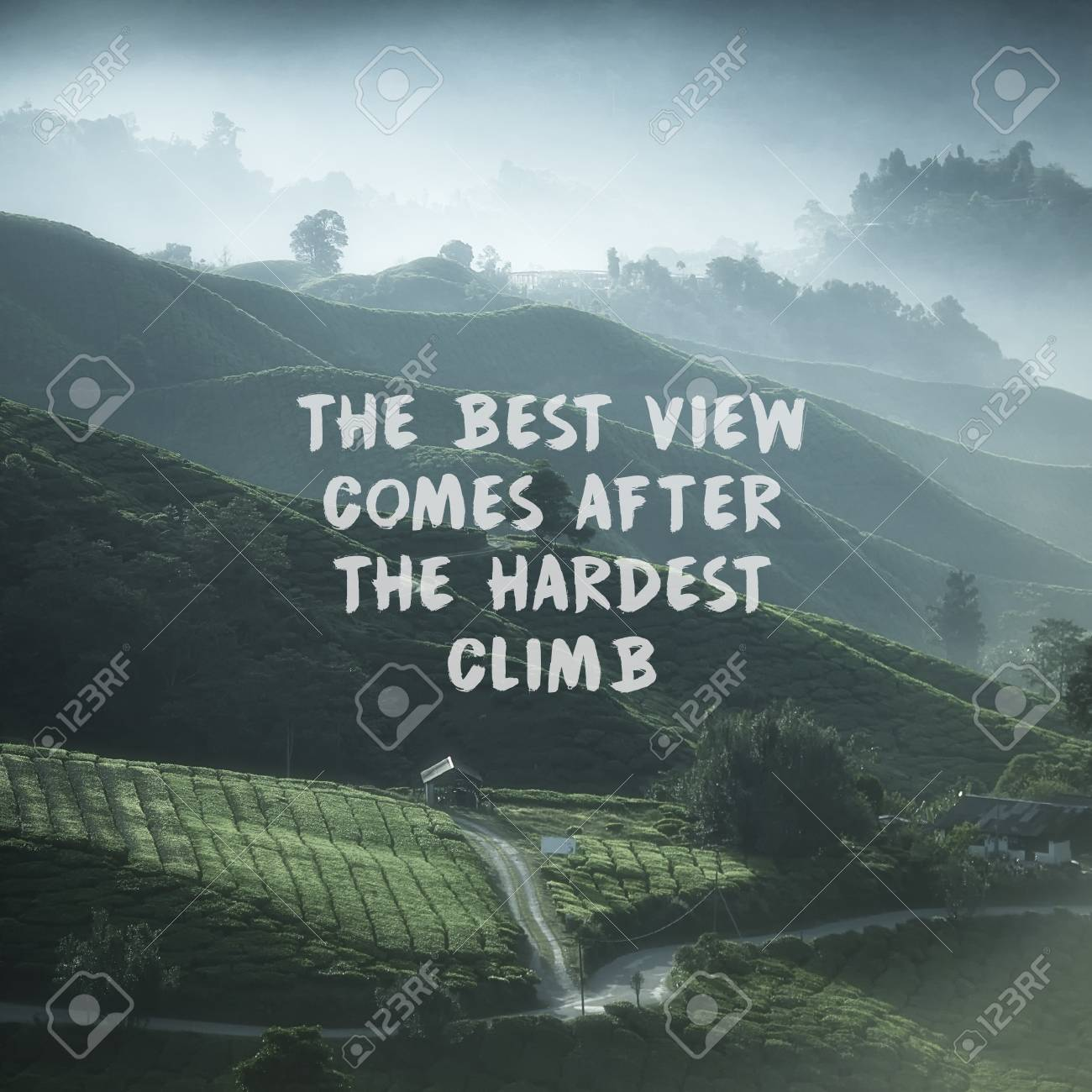 inspirational quotes on nature tea plantation stock photo picture