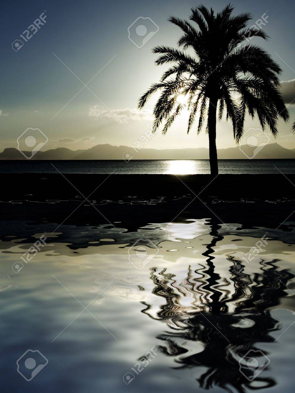Palm tree at beach at dusk palm tree at beach at dusk 2643808 voltagebd Image collections