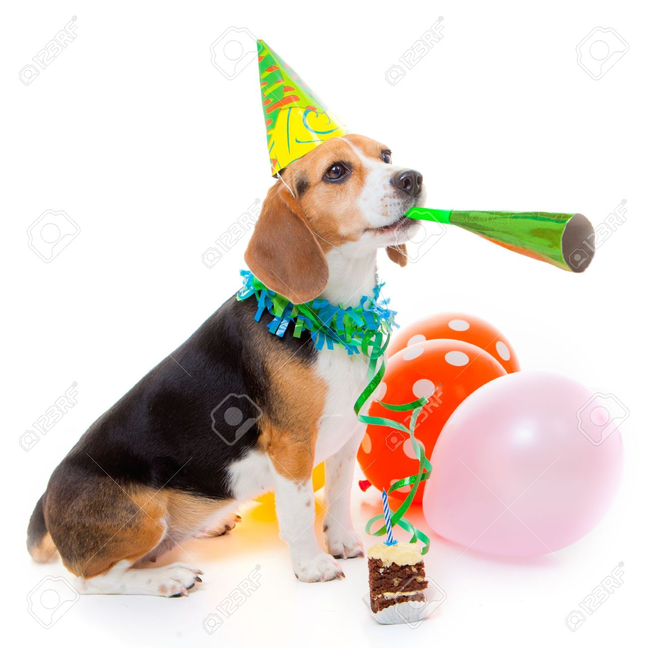 Chien Animal Fête Célébrant Anniversaire Ou Un Anniversaire