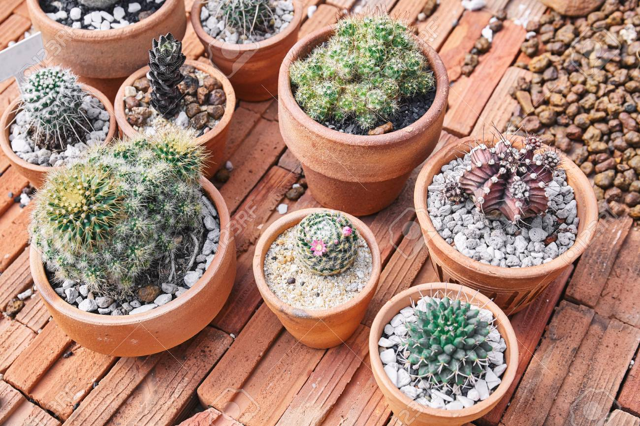 Mixed Of Mini Cactus Succulent Plants In Brown Cray Pot On Bricks Stock Photo Picture And Royalty Free Image Image 115377285