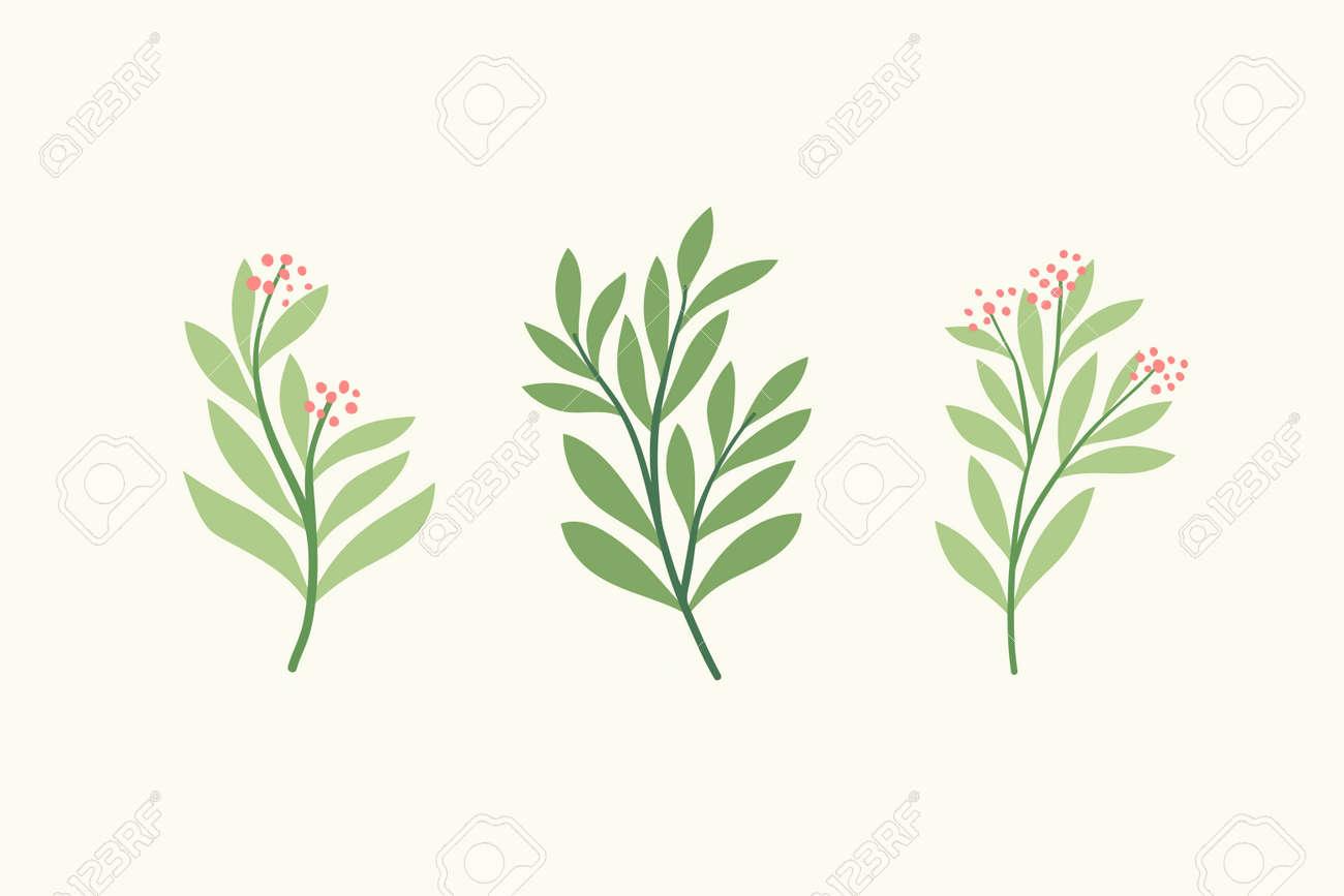 Set of vector floral elements. Hand drawn leaves isolated. Botanical illustration for decoration, print design. - 168265023
