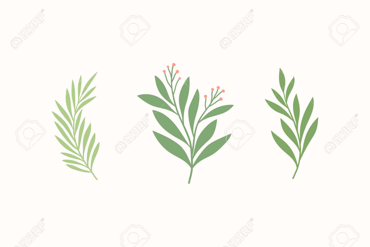 Set of vector floral elements. Hand drawn leaves isolated. Botanical illustration for decoration, print design. - 168265260