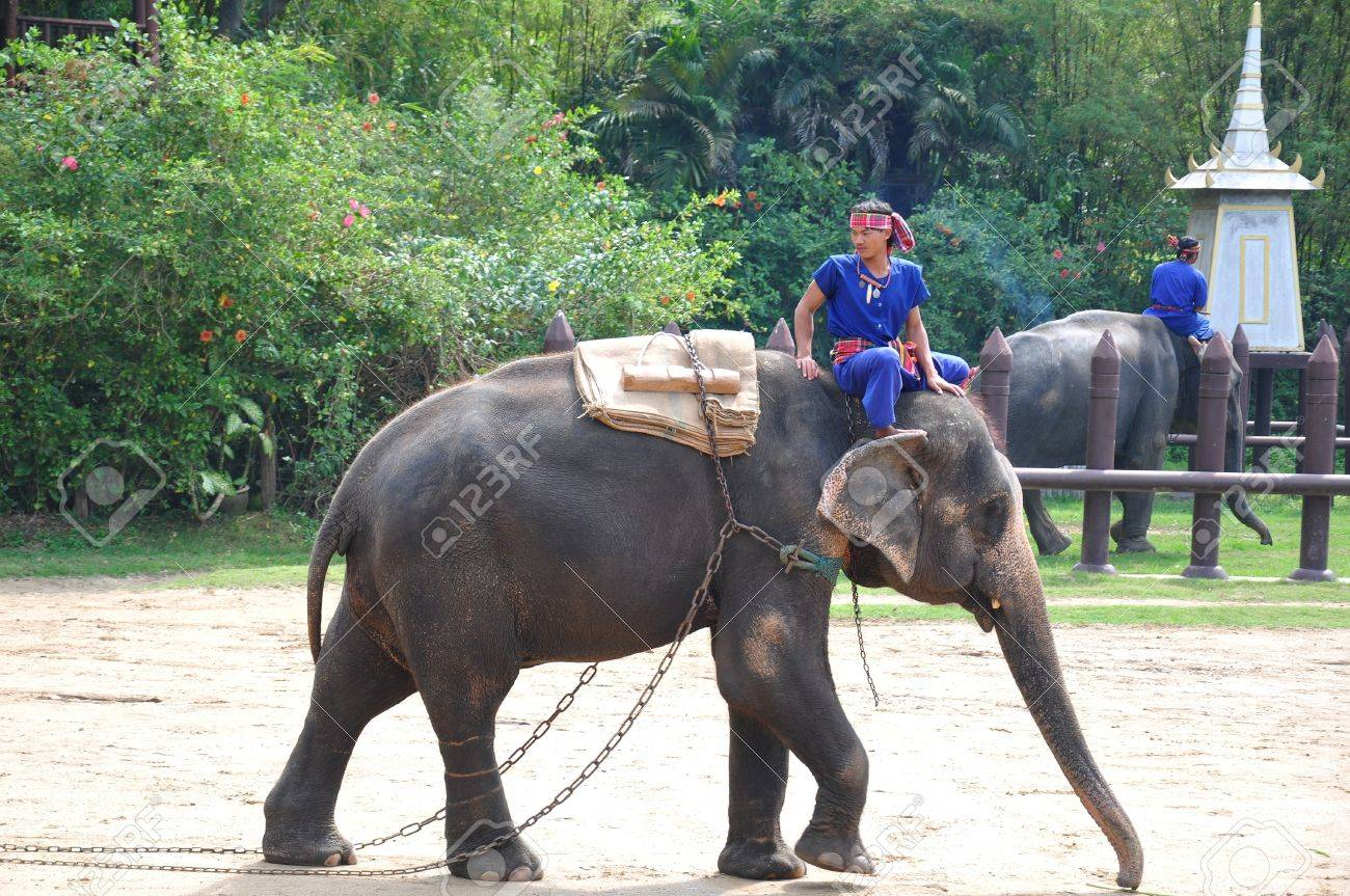 Elephant  show at Samphran Elephant Ground & Zoo, Thailand.   Stock Photo - 11729457