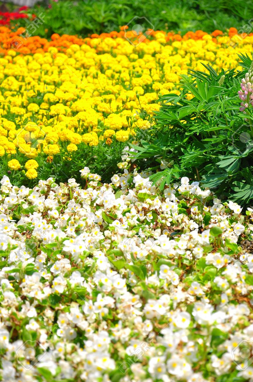 Colorful flower field taken from South Korea Stock Photo - 14219843