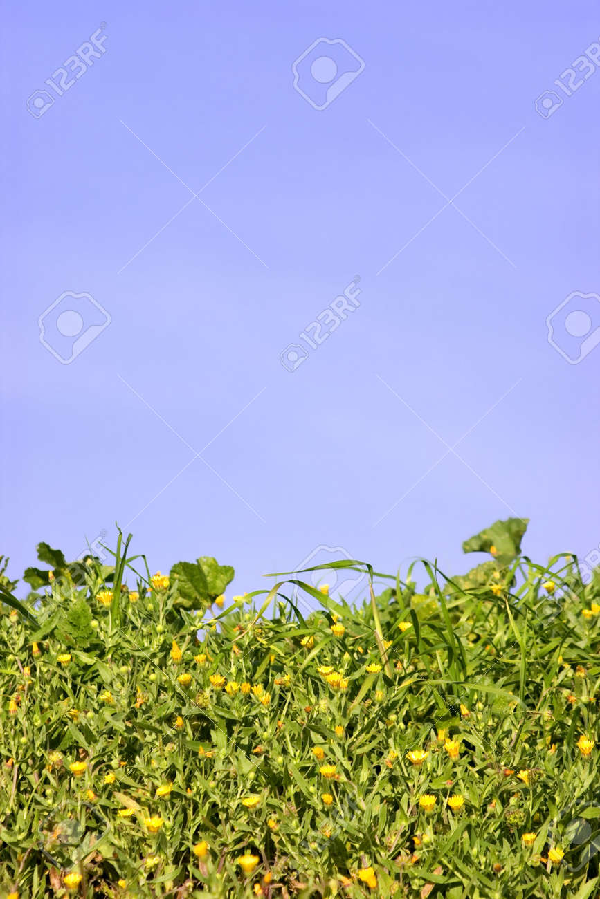 Bright Green Grass Filled With Tiny Yellow Flowers Against A Stock