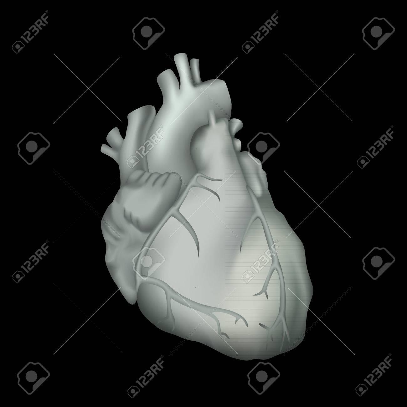 Corazón Humano. Ilustración De La Anatomía. Imagen Gris, Fondo Negro ...
