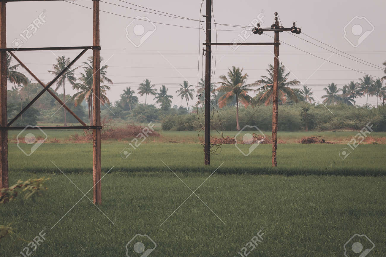 Beautiful view of vast rice fields in rural area, Tamil Nadu, India. View of paddy fields. - 164966660