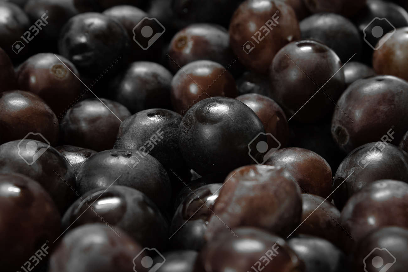 View of grapes of Muscat Hamburg variety (otherwise known as 'Paneer' grapes) . Common grape variety in Tamil Nadu, India. - 169342263