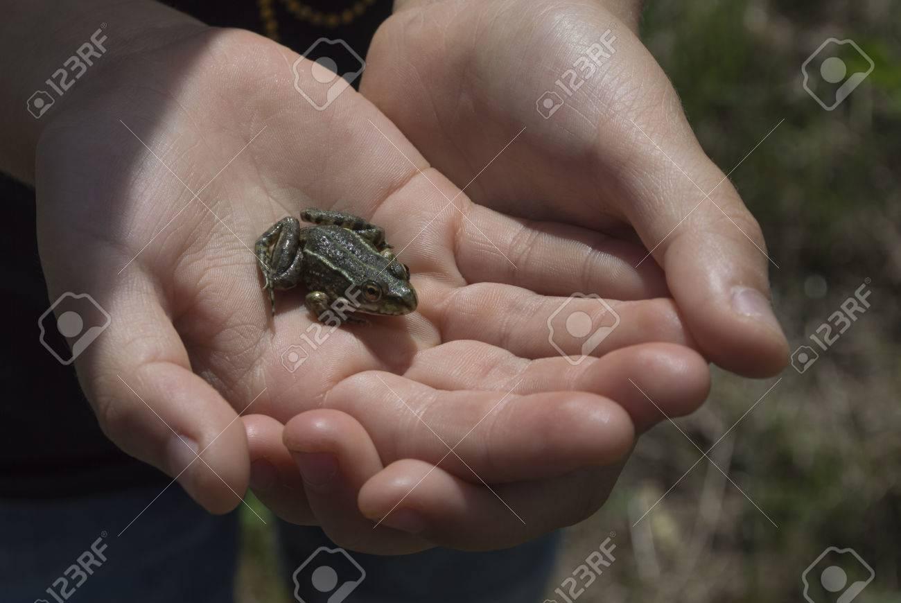 Frog in child hands - 26275392
