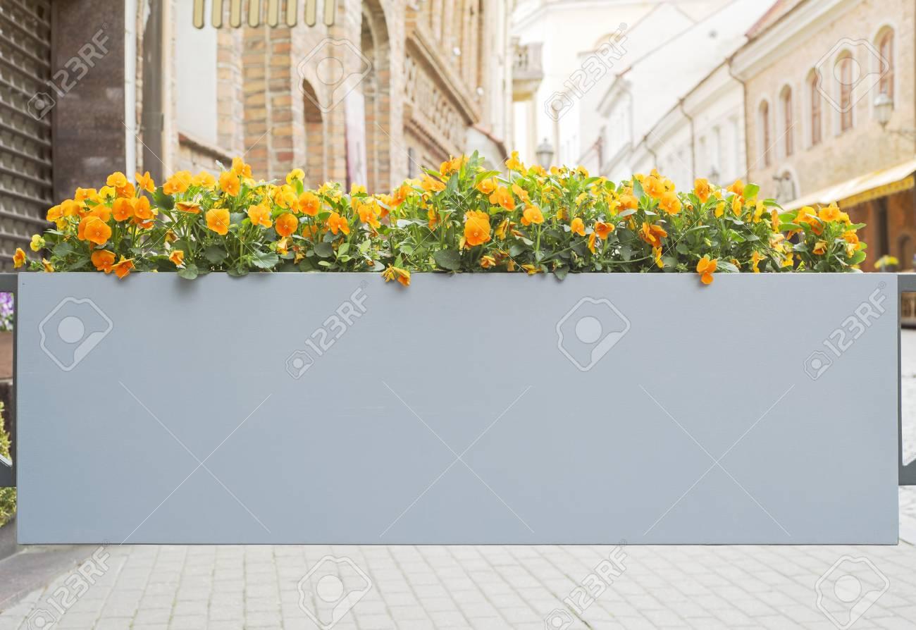 großer blumentopf mit blumen in sonniger altstadt lizenzfreie fotos