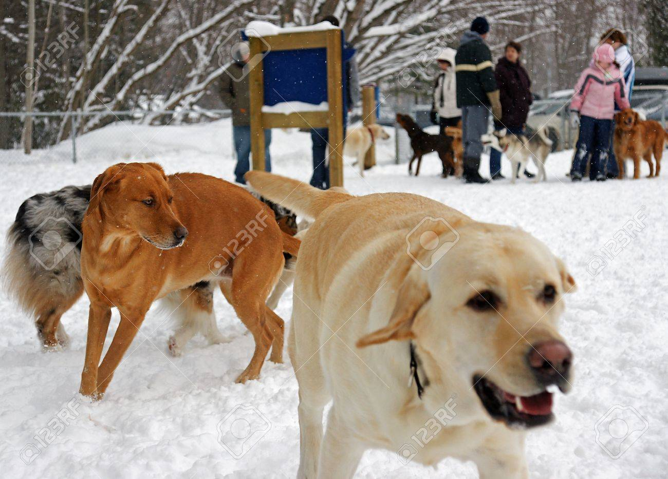 Sunday Afternoon at the Leash Free Dog Park - 4173814