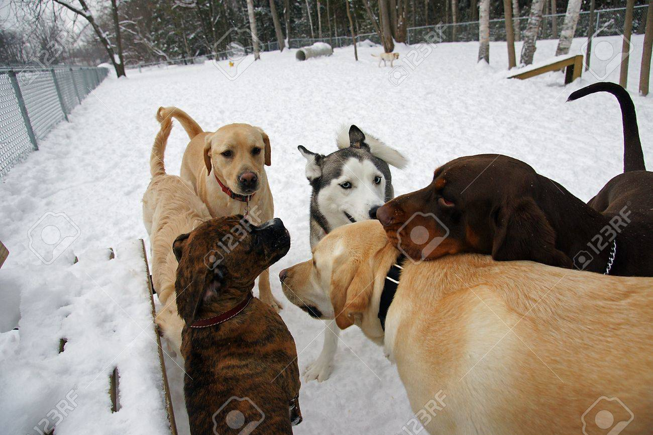The Leaders of the Pack meet to discuss matters at the Leash Free Dog Park - 4173815