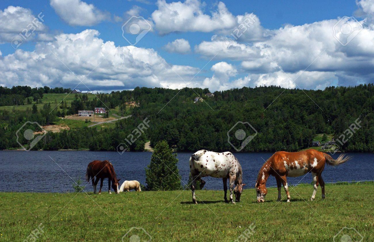 Horses grazing in pasture - 5255870