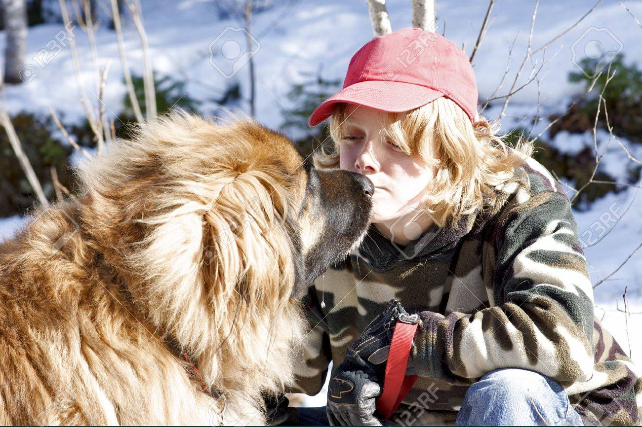 A teenage boy and a Leonberger dog share a touching moment. - 12231682
