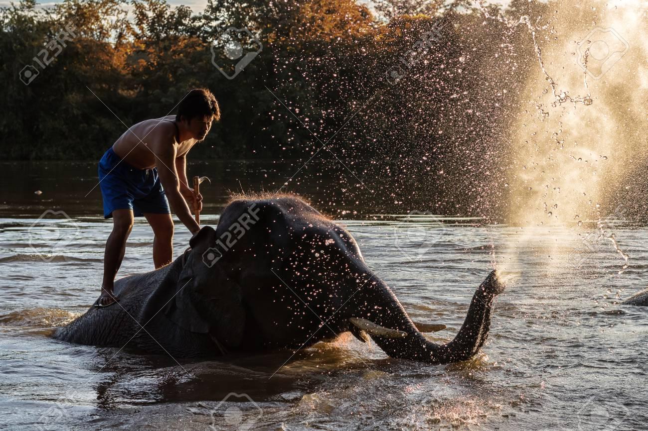 KANCHANABURI,THAILAND - SEPTEMBER 3,2017:The bathing elephants. At the River Kwai in the evening. In CHANG PUAK CAMP Kanchanaburi, Thailand - 90572811