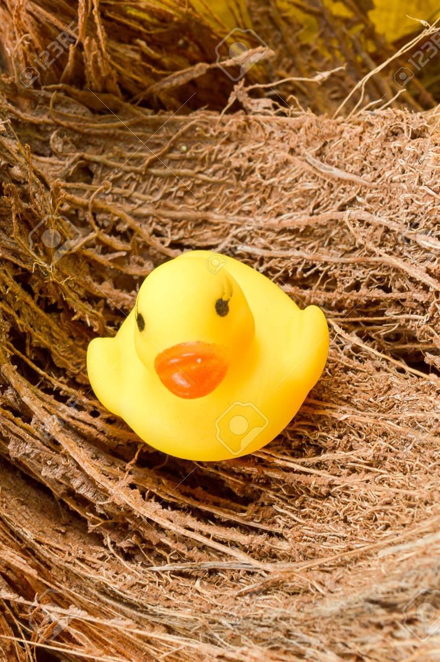 Yellow Plastic Duck Doll On Coconut Husk Stock Photo, Picture And ...