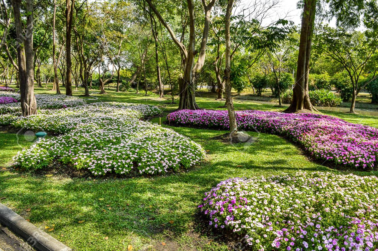 banque dimages beau jardin fleuri en thalande - Jardin Fleuri