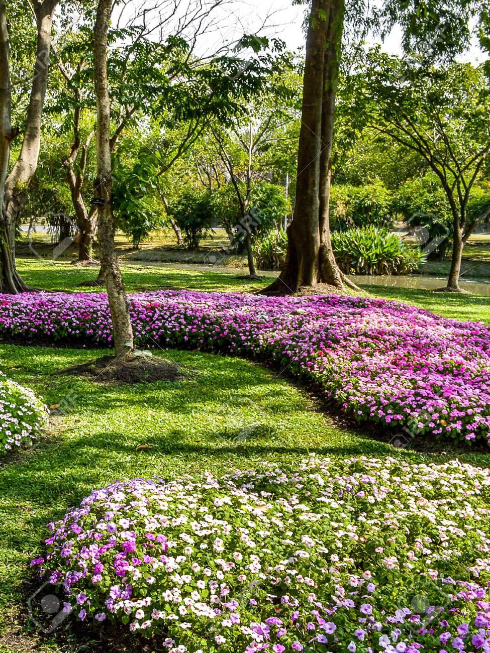 Beau Jardin Fleuri En Thaïlande Banque D\'Images Et Photos Libres De ...