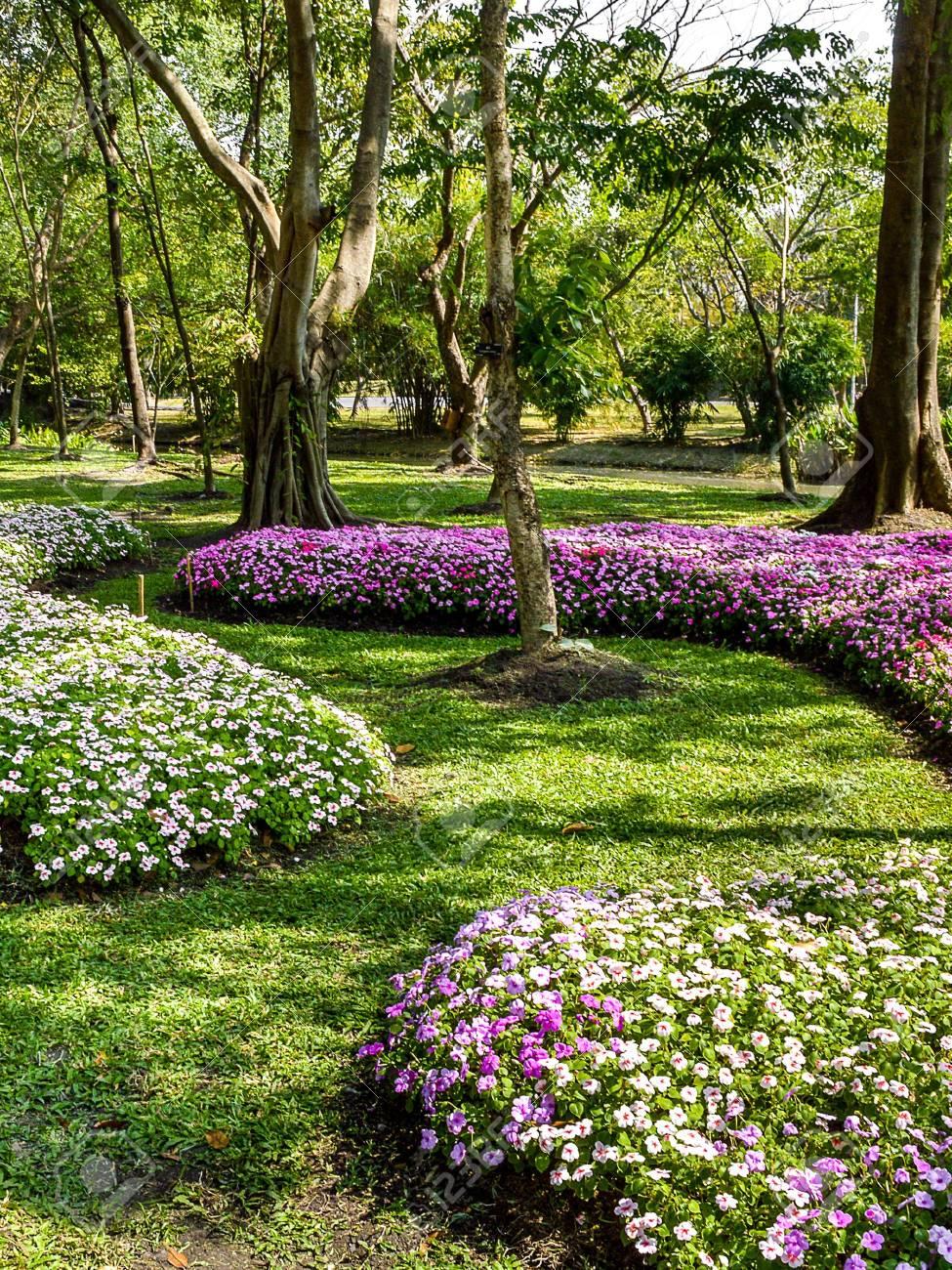 Beau Jardin Fleuri En Thailande Banque D\'Images Et Photos Libres De ...