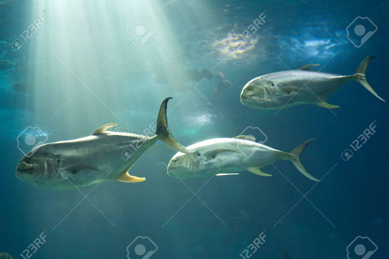 Fishes in Lisbon Oceanarium Stock Photo - 12692341