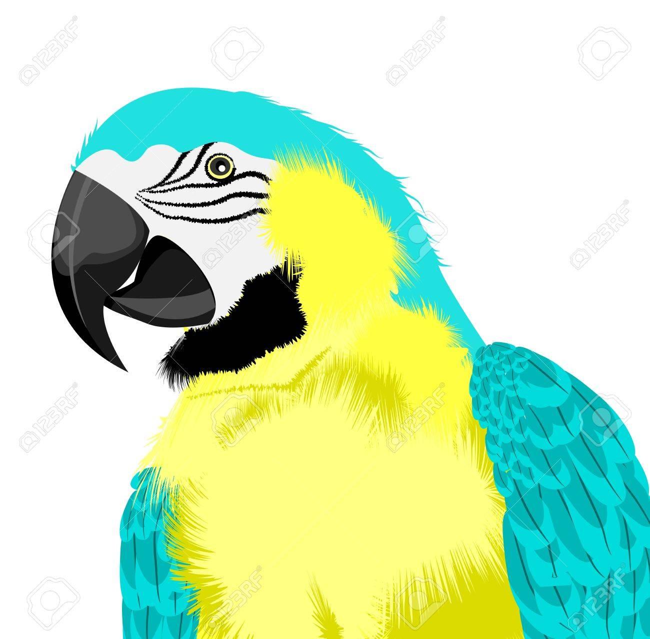 yellow parrot Stock Vector - 15274799
