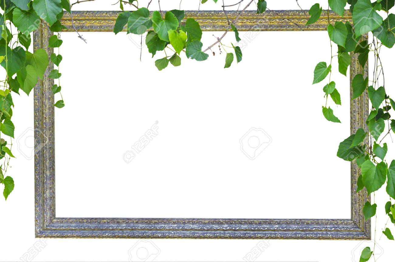 frame with nature green leaf isolated on white background Stock Photo - 19453031