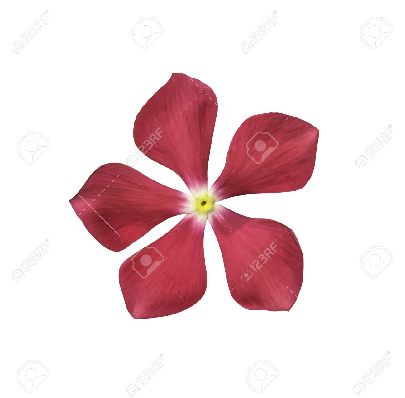 Single Pink Flower Isolated On White With Clipping Path Stock Photo