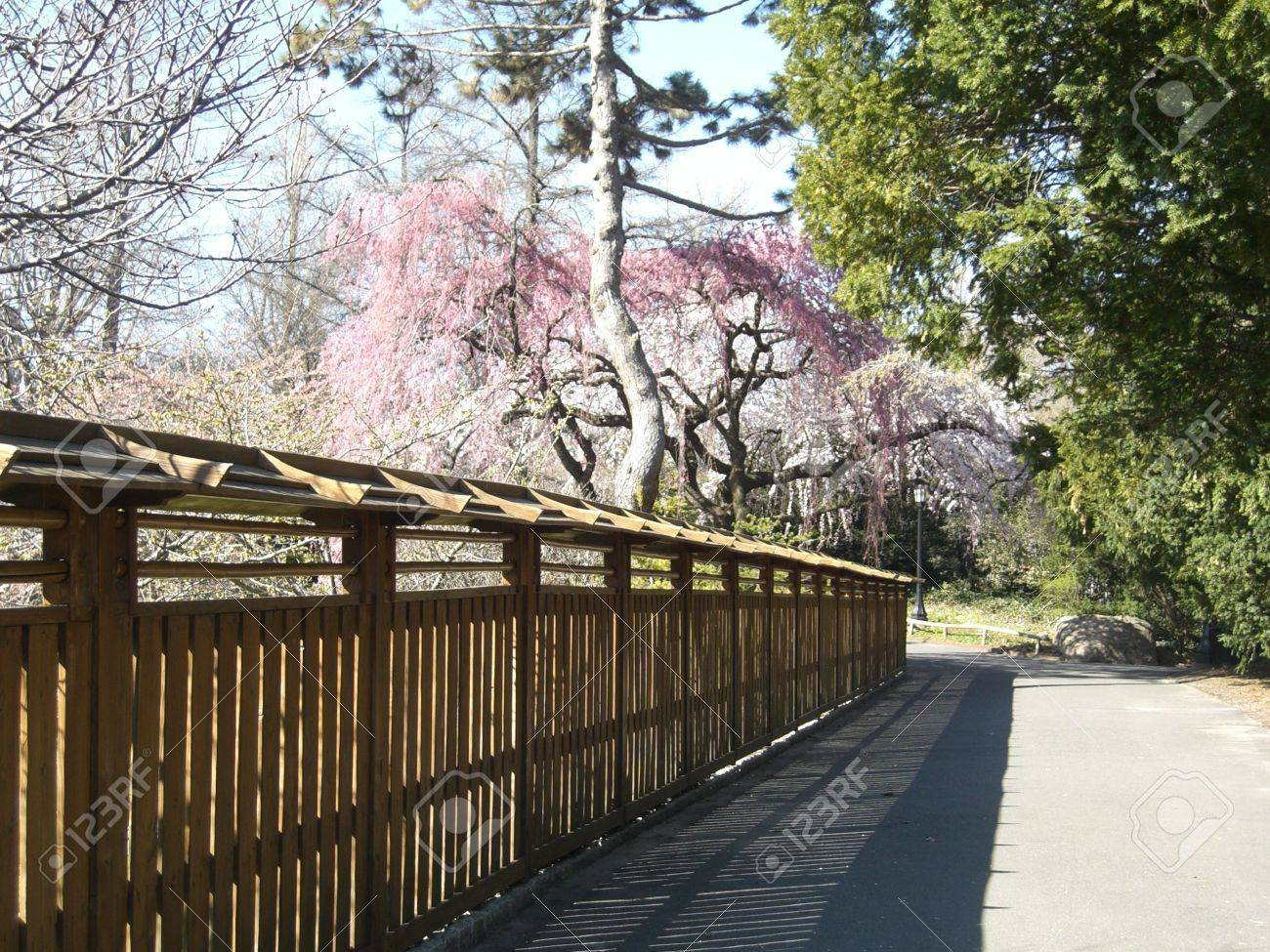 Japanese Garden Fence In The Spring Stock Photo   2850939