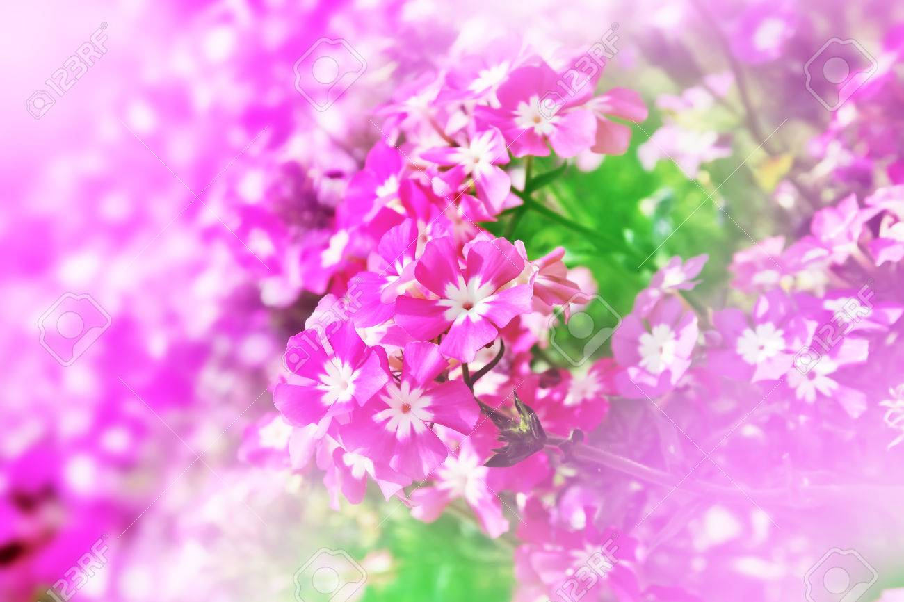 pink flower scene in soft wallpaper background stock photo