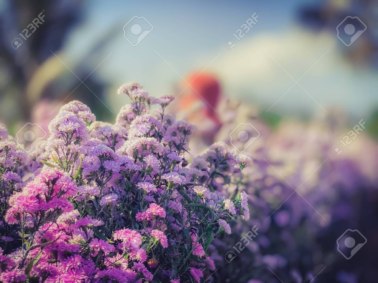 Beautiful Flowers In Blooming Field In The Farm Nature Wallpaper Stock Photo Picture And Royalty Free Image Image 138458997