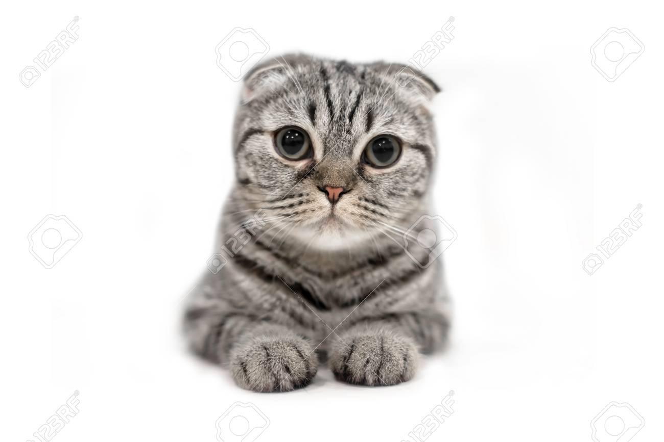 Pondering cat | Storage 9