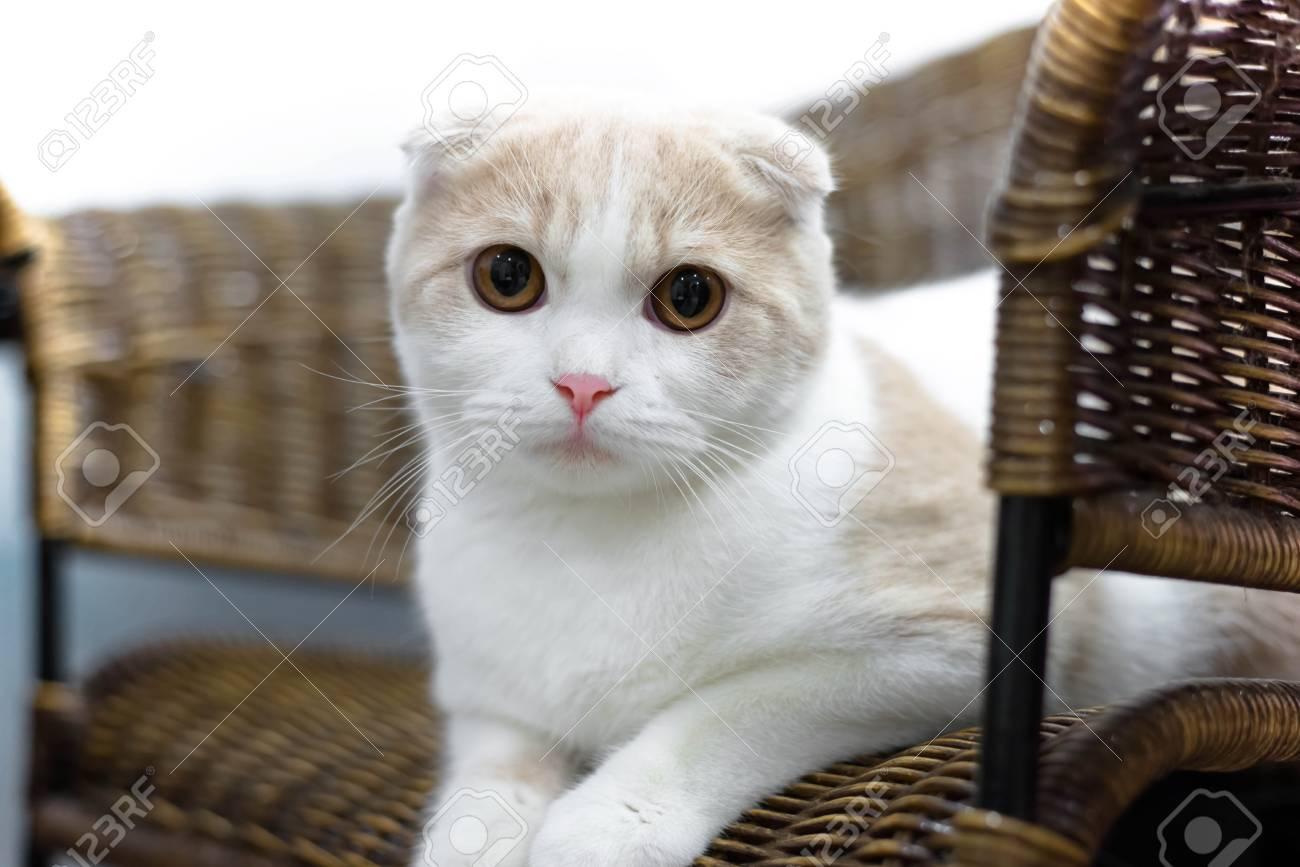 Slapen Op Grond : Portret van bruine oog kat geïsoleerd op de vloer kat slapen op
