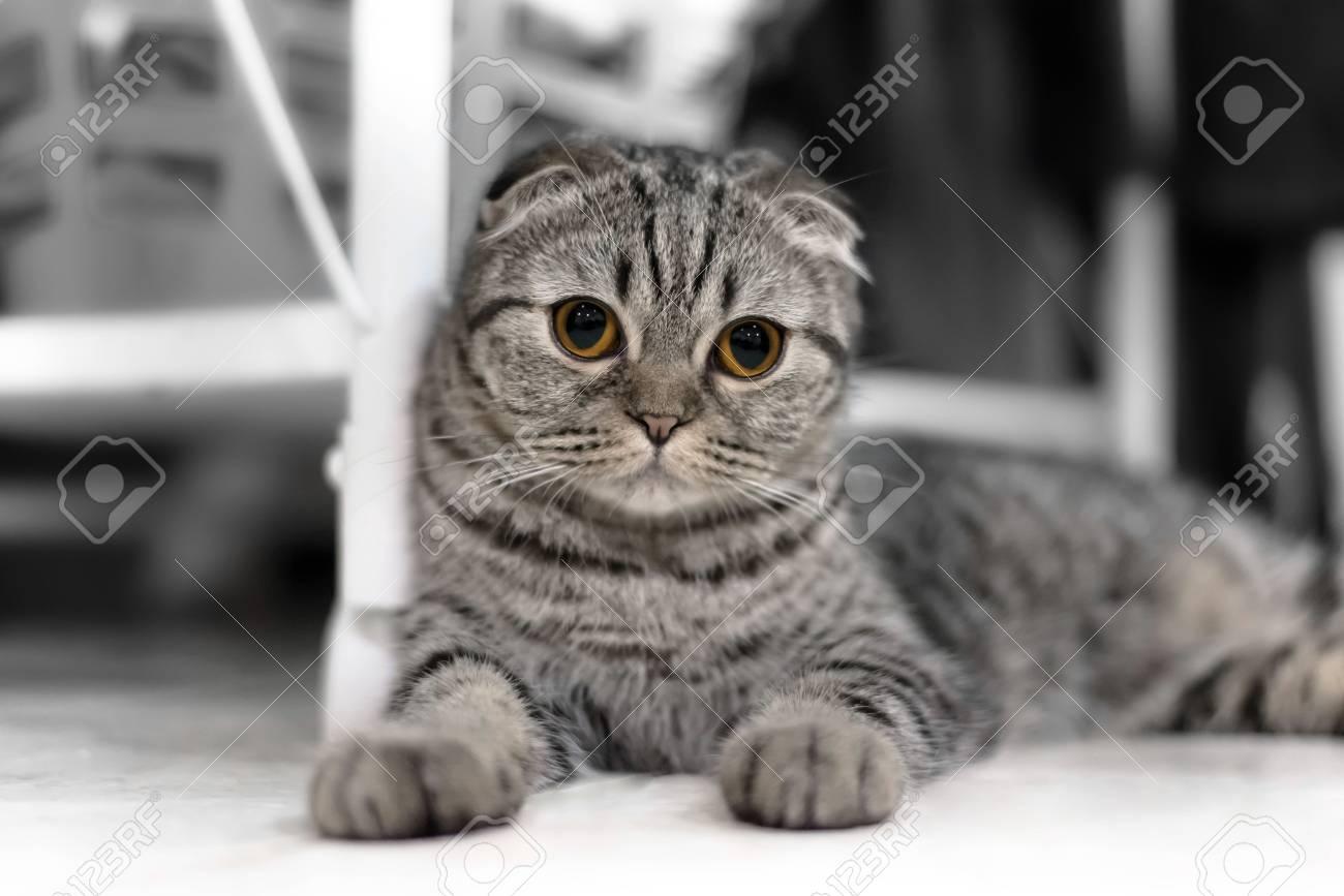 Slapen Op Grond : Portret van bruine oog kat geïsoleerd op de vloer kat slapen op de