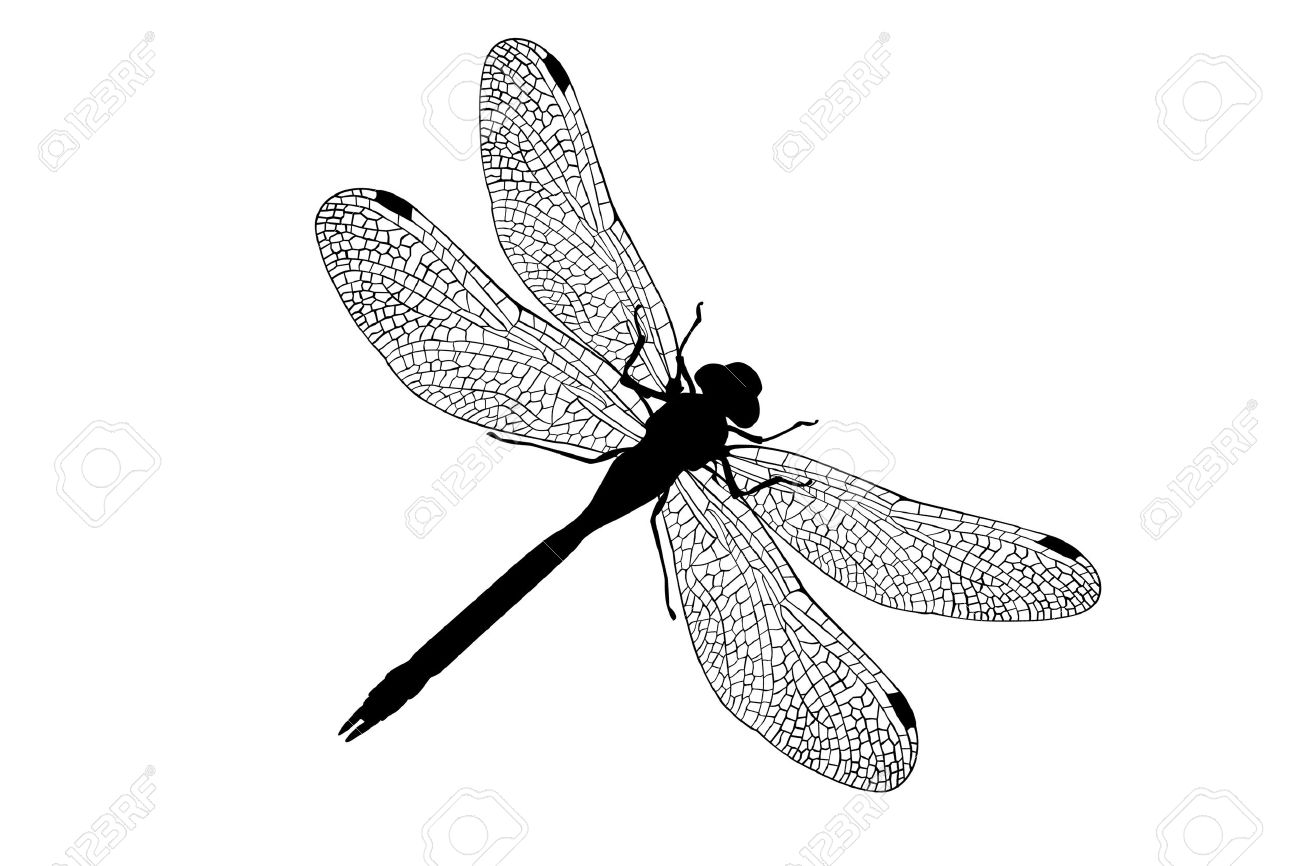 dragonfly Stock Photo - 10957960