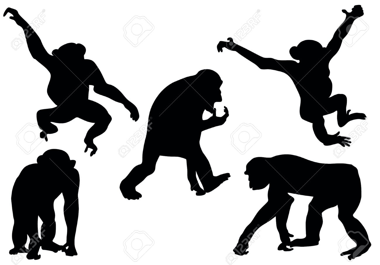 Collection of apes silhouettes Stock Vector - 19917906